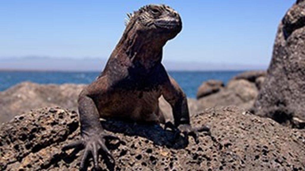 RS Galapagos