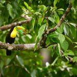 Ecotourism Destinations Around the World