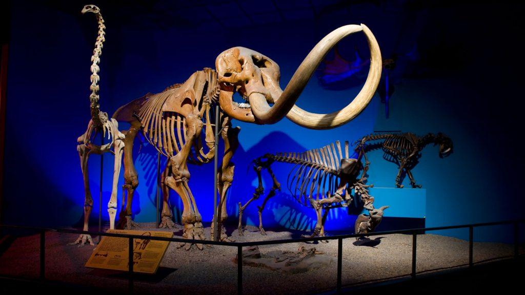 Milwaukee Public Museum Visit Milwaukee 2 (Copy)