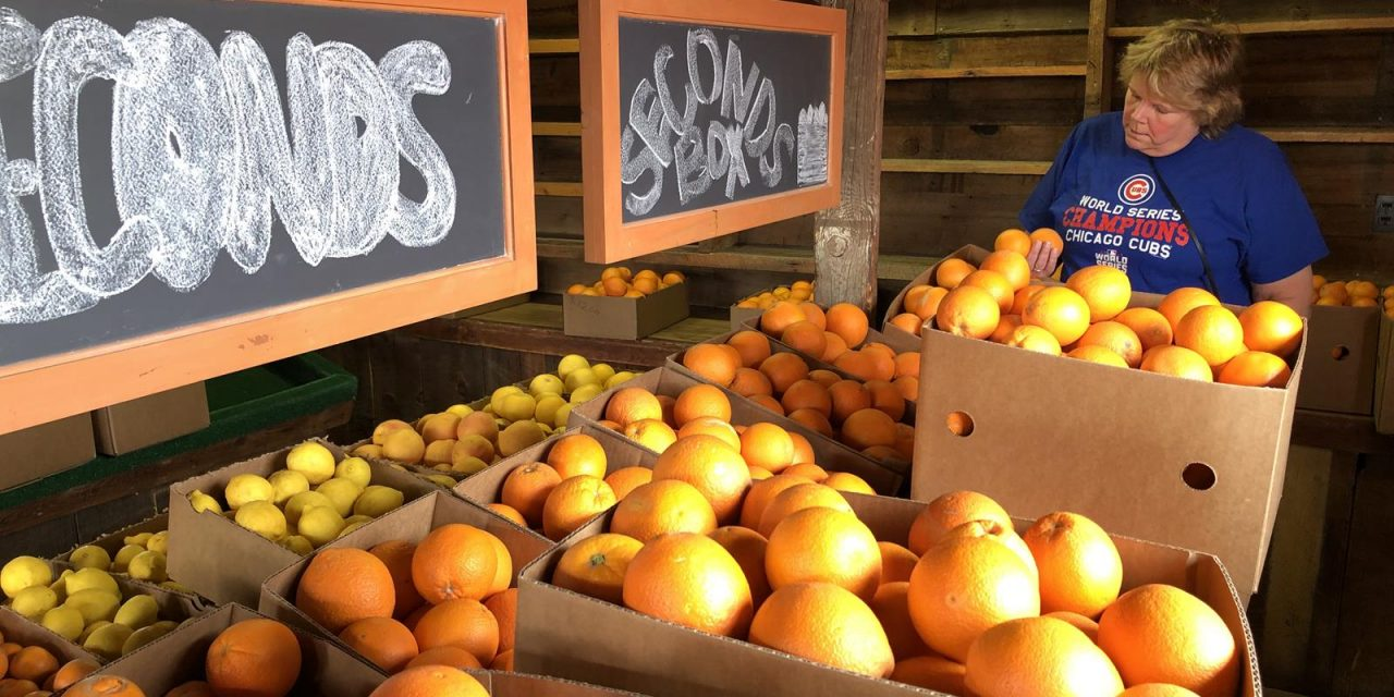 Mesa Area Offers Bushels of Agritourism Opportunities