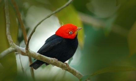 Eco-Tourism in Panama: What to Do
