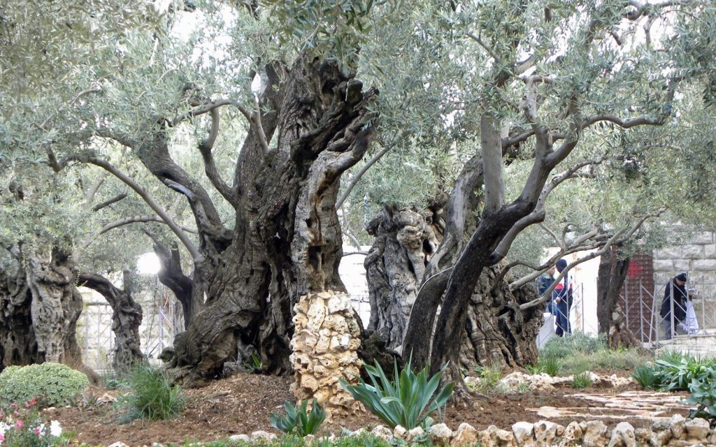 Israel: A Religious Journey Through the Works of Jesus Christ