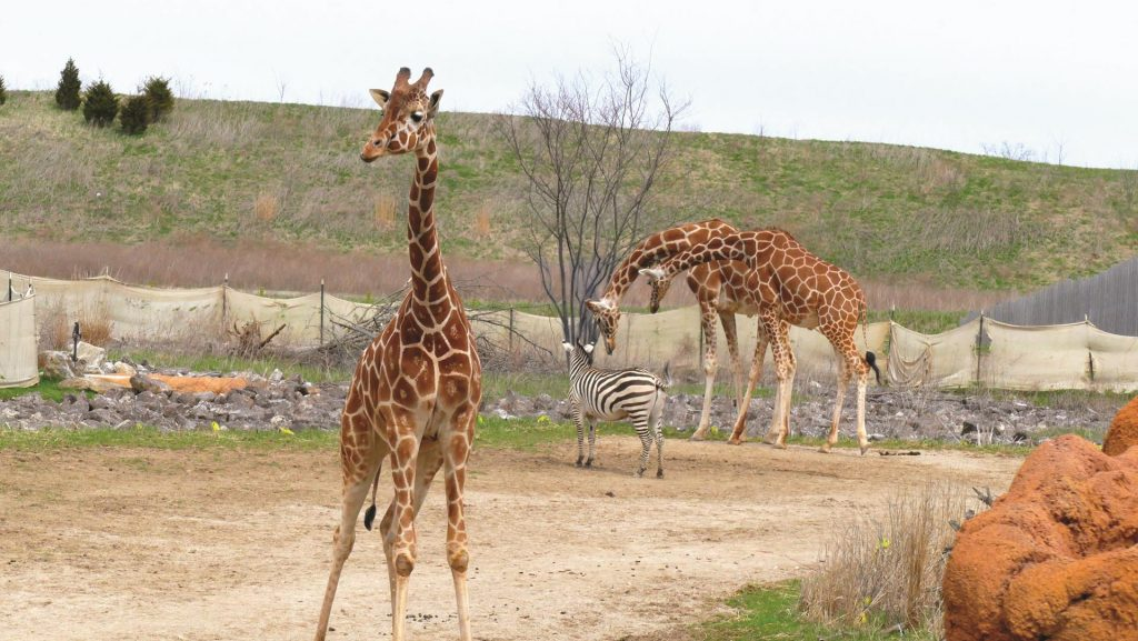 Columbus Zoo photo by Mark Cameron