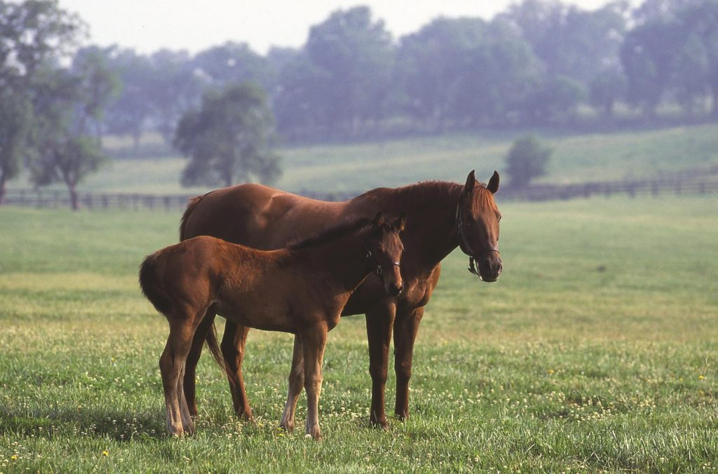 Horses in field Kentucky Horse Park_