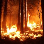 Travel and Tourism: The Impact of the California Wildfires
