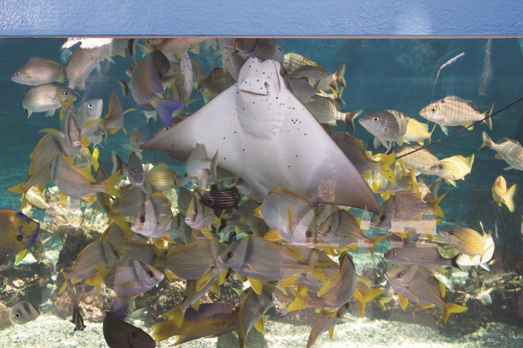 LG1220_East_St Augustine Aquarium-HirdJ-ZF-10660-01152-1-001-020_cmyk_l