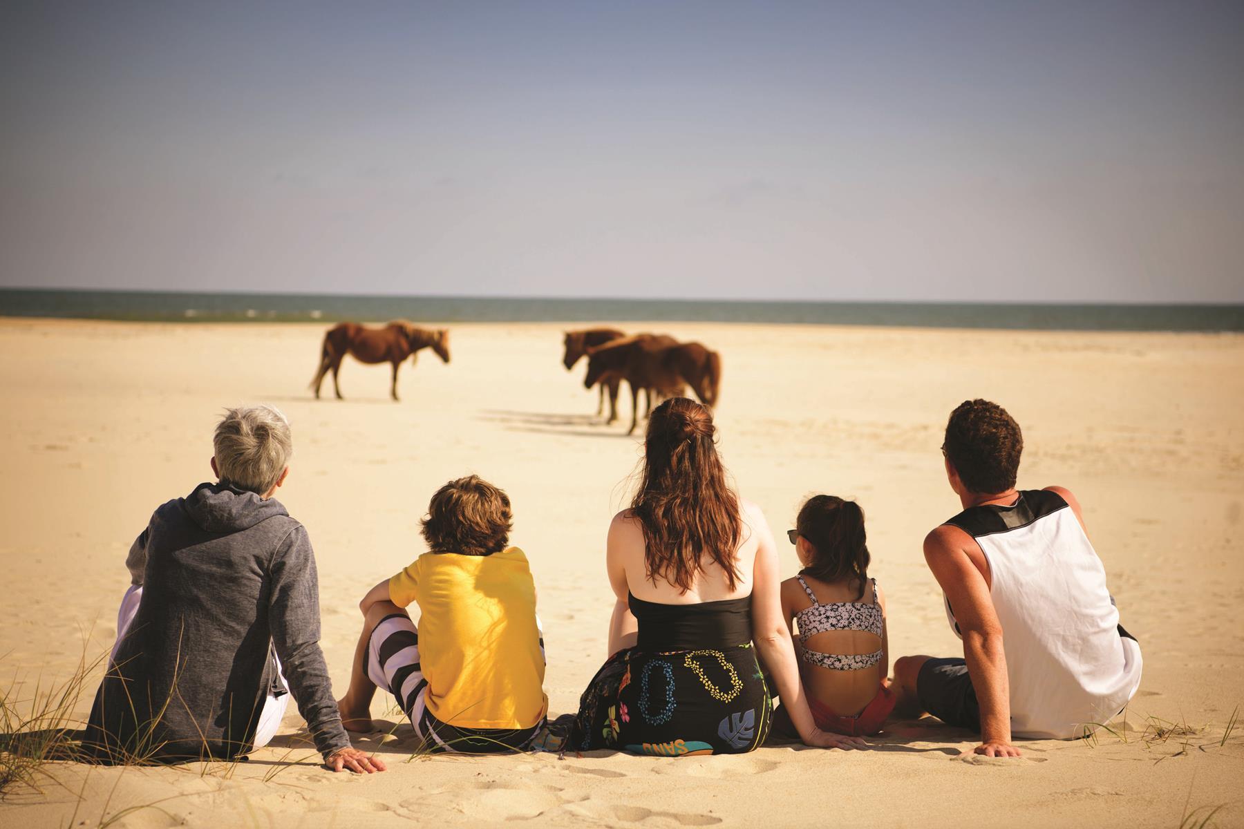 LGT1220__MD_Ponies on Beach