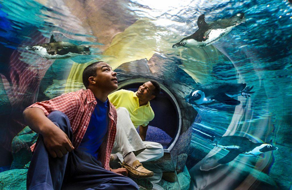 Ripley's Aquarium Broadway at the Beach