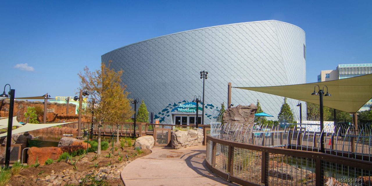 Mississippi Aquarium is a Spectacular Addition to the Gulf Coast