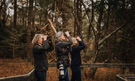 Experience Virginia Birding at these Two Coastal Destinations