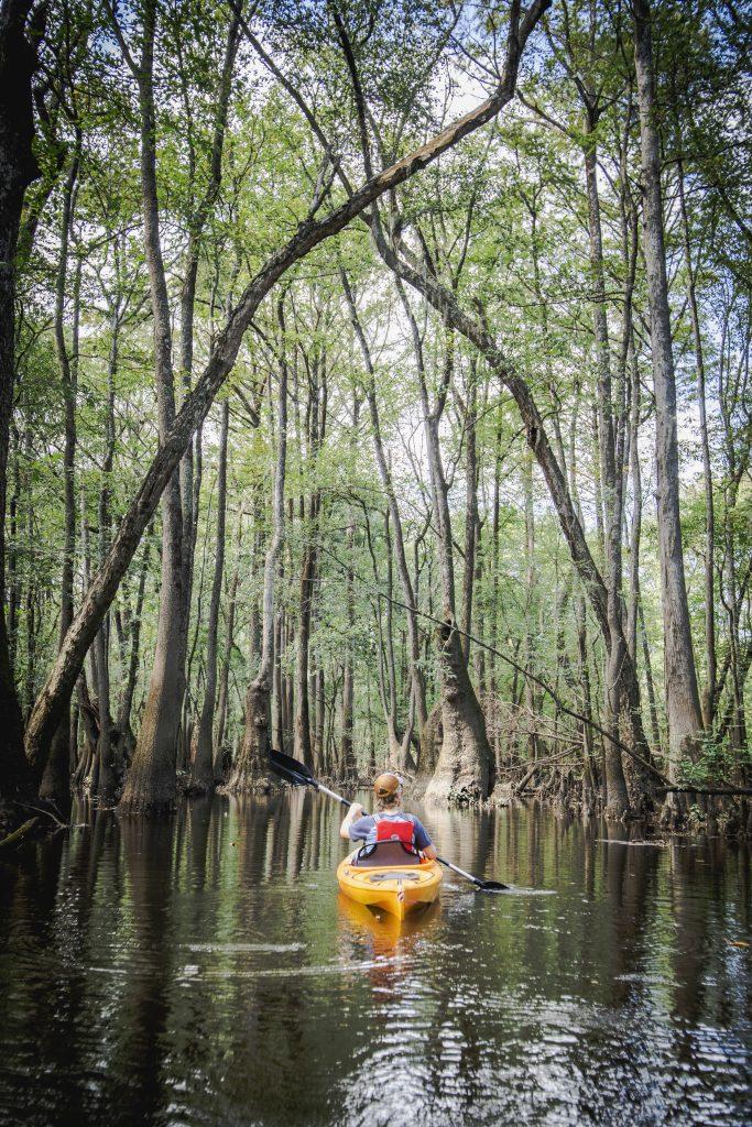 Greenville solo kayaker-Credit VisitGreenvilleNC.com
