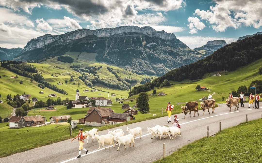Cows, goats and their costumed herders parade down the mountainside in an Alpine descent festival near Schwende in the canton of Appenzell Innerrhoden. Switzerland Tourism/Jan Geerk